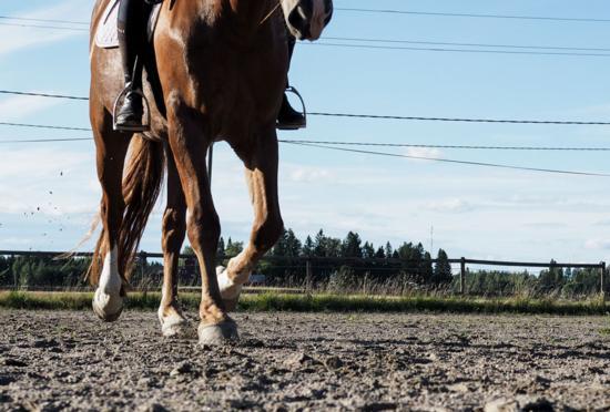 hevosen nivelrikko oireet