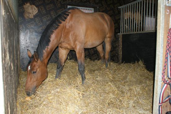 Mahahaava Hevosella