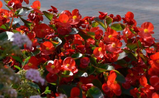 Kauneimmat ja kestävimmät kasvit haudalle