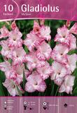 Gladiolus My Love, 10 kpl