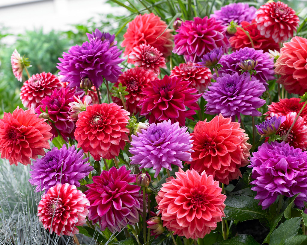 Kukkasipuli